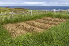 Raised bed garden by the sea, Newfoundland