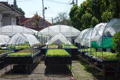 Raised bed Gardens with Shade Cloth. An image of a organic salad farm in the urban city with individual raised beds on feet with hoop house style frames and royalty free stock photos
