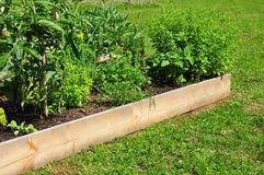 Raised bed with herbs Royalty Free Stock Photos