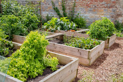 Raised Bed Vegetable & Flower Garden. Domestic Raised Bed Vegetable & Flower Garden Stock Photo