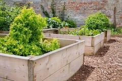Raised Bed Vegetable & Flower Garden. Domestic Raised Bed Vegetable & Flower Garden Stock Photography