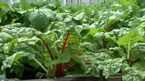 Raised Bed Vegetable Garden - Slow Dolly Shot - Close Up stock video footage