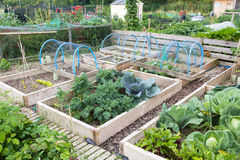 Raised beds in an allotment garden Stock Image