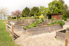 Raised Beds in a community garden. Grow vegetables in Spring stock photos