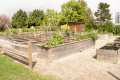 Raised Beds in a Community Garden. Vegetables grow in raised Beds in a Community Garden in Spring Stock Photos