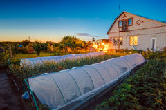 Raised Beds In Vegetable Garden. Cucumbers Vegetables Growing In Raised Beds In Vegetable Garden And Hothouse Stock Photography