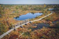 Raised bog. Boardwalk in Kemeri National park. stock images