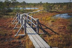 Raised bog. Boardwalk in Kemeri National park. stock photo