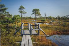 Raised bog. Boardwalk in Kemeri National park. royalty free stock photography