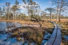 Raised bog. Boardwalk in Viru bog nature trail. Estonia. Early springs. royalty free stock photos