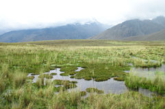 Raised Bog in central Peru Royalty Free Stock Photo