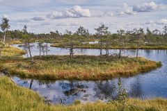 Raised bog in Latvia. Kemeri national park. Landscape. Raised bog. Kemeri National park in Latvia. View on island and lake with reflections. Summer stock photo