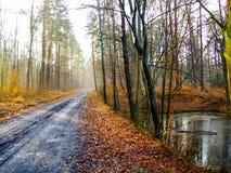 Mud road in Kozienicki Park Krajobrazowy in Poland. Raised bog in Kozienice Landscape Park in Mazovia region in Poland. Photo taken during snowless January in stock photography