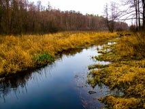 Stream in Kozienicki Park Krajobrazowy in Poland. Raised bog in Kozienice Landscape Park in Mazovia region in Poland. Photo taken during snowless January in the stock photo