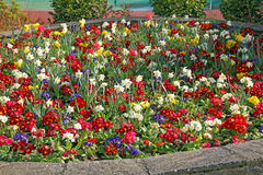 Raised flower bed. Photo of a pretty colourful raised flower bed with various spring flowers in full bloom Stock Images