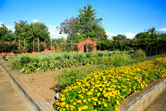 Raised flower beds in Kitchen garden Royalty Free Stock Photo