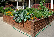 Raised garden bed Royalty Free Stock Photo