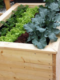 Raised garden bed for container gardening. Small raised garden bed for vegetable container gardening on the balcony or terrace Stock Photos