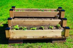 Raised Garden Bed. With small green vegetables growing on an outdoor lawn Stock Photo