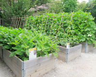 Raised Garden Beds Stock Images