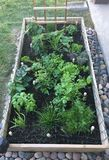 Raised Garden royalty free stock photos