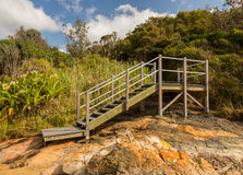 Raised steps through forest in NSW Royalty Free Stock Images