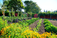Raised vegetable beds in Kitchen garden. Hamilton gardens, New Zealand Royalty Free Stock Photo