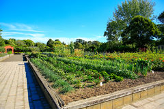 Raised vegetable beds in Kitchen garden Stock Image