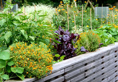 Raised vegetable garden bed Royalty Free Stock Images