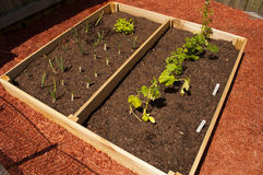 Raised Vegetable Garden Royalty Free Stock Photography