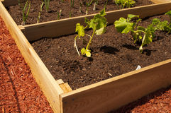 Raised Vegetable Garden. An image of a raised vegetable garden Royalty Free Stock Images