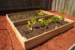 Raised Vegetable Garden. An image of a raised vegetable garden Stock Images
