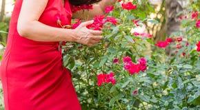 raised veins of a menopausal woman Stock Photos