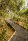 Raised walkway through forest in NSW Royalty Free Stock Photography