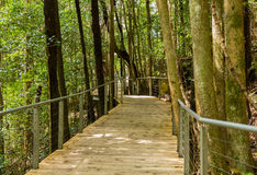 Raised walkway through forest in NSW Stock Image
