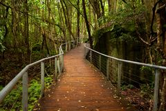 Raised walkway in rainforest floor near Katoomba in New South Wa royalty free stock images