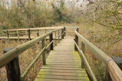 Raised walkway. Stock Photography