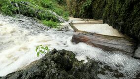 Raised water level brinks trunk and blocked stream. In cascade is create brown foam and whirlpools.