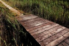 Raised wooden plank path meets stone pavement path in salty marsh near Nin, Croatia. Shot during summer, on high noon Stock Image