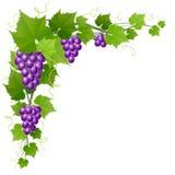 Raisin avec la décoration de coin de feuille pour la récolte d'automne Image libre de droits