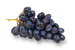Raisin bleu Image stock
