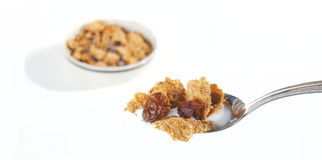 Raisin Bran Cereal in spoon. With milk with bowl in background Royalty Free Stock Photo