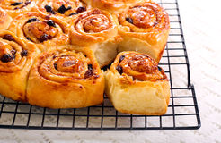 Raisin and cinnamon rolls Stock Images