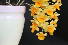 Raisin d'orchidées Photo libre de droits