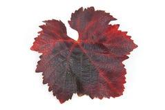 Raisin de feuilles photographie stock