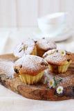 Raisin muffin for breakfast Stock Images