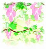 Raisin rose d'illustration Images stock