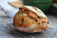 Raisin Rye Artisan Bread Royalty Free Stock Images