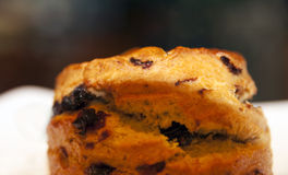 Raisin Scone Royalty Free Stock Image