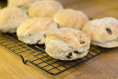 Raisin scones stock photo